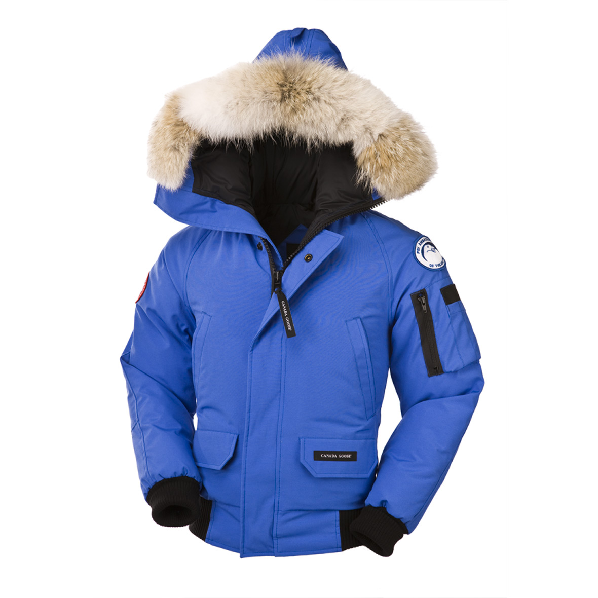 Canada Goose Polar Bears International Chilliwack Bomber PBI BLUE For Women